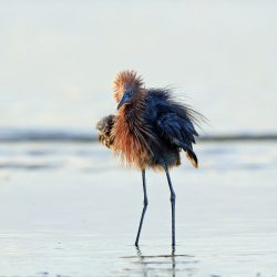 Nothing Better than Birding in Galveston!