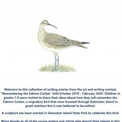 Remembering the Eskimo Curlew- A Collection of More Written Entries