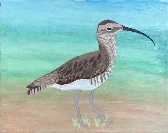 Eskimo Curlew on the Beach