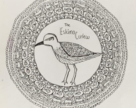 The Eskimo Curlew