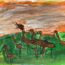 Flock of Curlew
