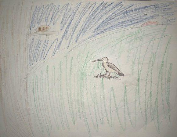 Eskimo Curlew